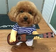 Костюм для собаки моряк с гитарой