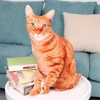 Игрушка подушка рыжая кошка