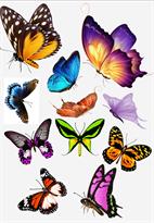 3D наклейка на машину бабочки купить