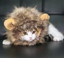 Парик с ушками для котов Король Лев