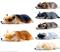 Магниты в форме спящих собак Корги - фото 13718