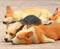 Магниты в форме спящих собак Корги - фото 13719
